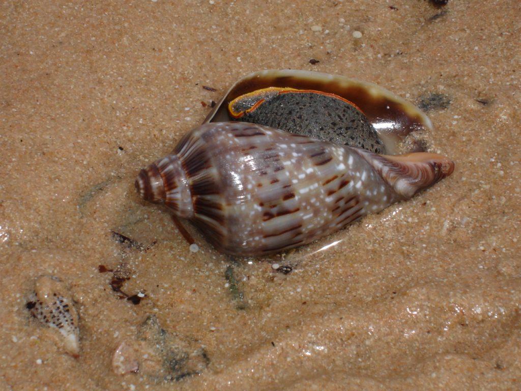 Invertebrates - Shark Bay