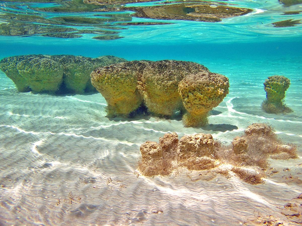 Hamelin Pool Shark Bay