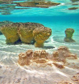 Stromatolites-003