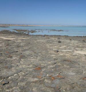 Stromatolites-005